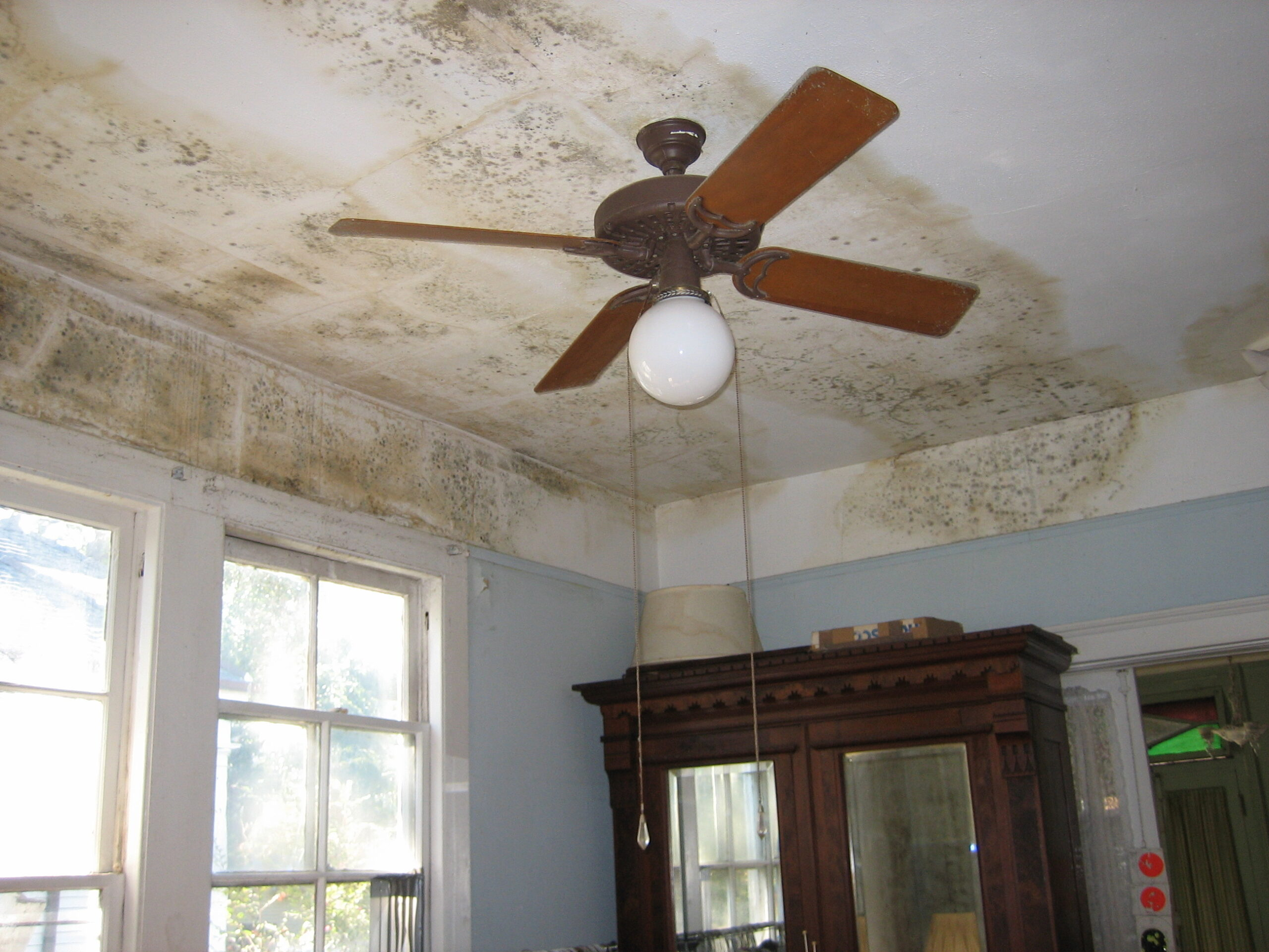 mold damage repair required on this ceiling