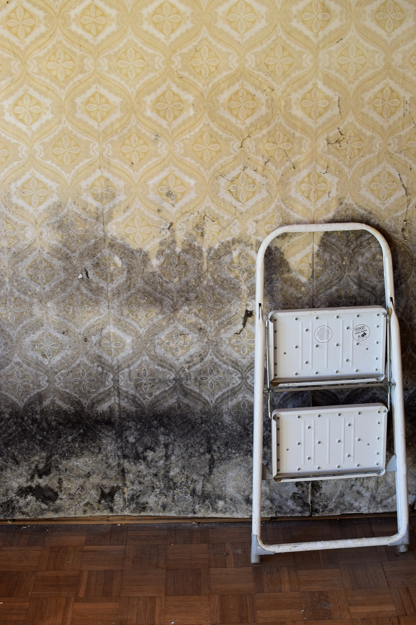 certified mold remediation companies clean mold on walls