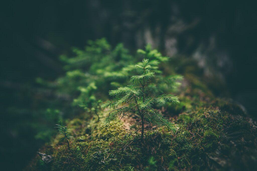 fern in the wild