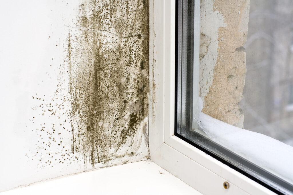 mold growing near window